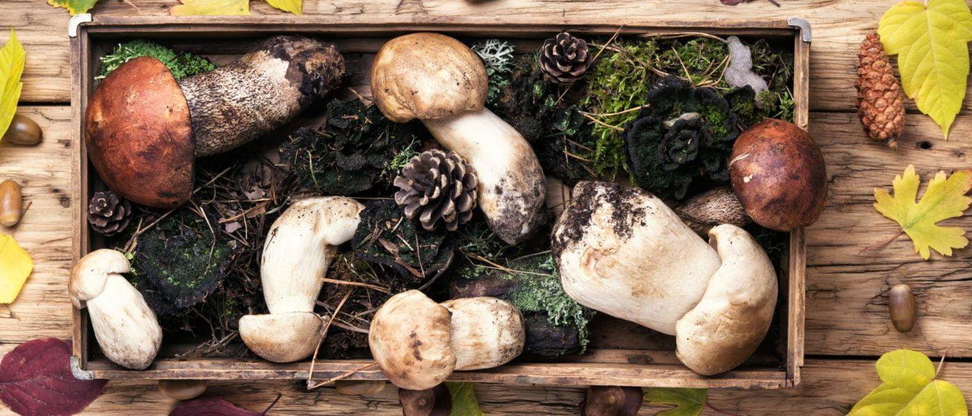 Sieni ja riistakausi