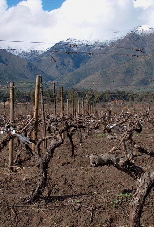 Cousiño-Macul viinitarhoja Chilessä