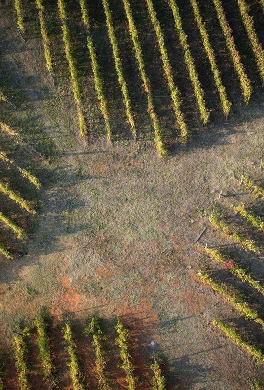 Risteys viinitarhan keskellä