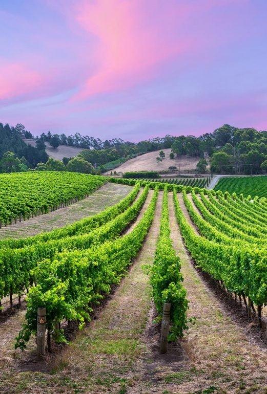 Ilta viinitarhassa